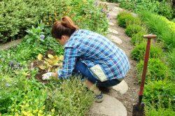 sadzenie roślin latem