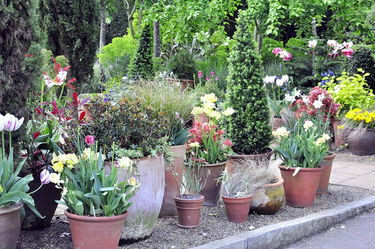 rośliny cebulowe w donicach